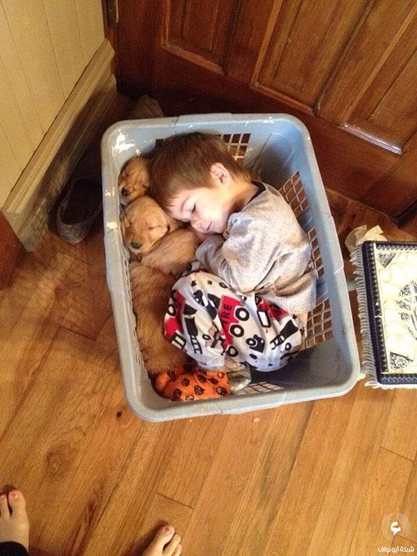 طفل نائم مع كلابه