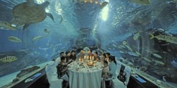 هايشنغ القطبي يفتتح مطعمًا وسط المخلوقات البحرية
