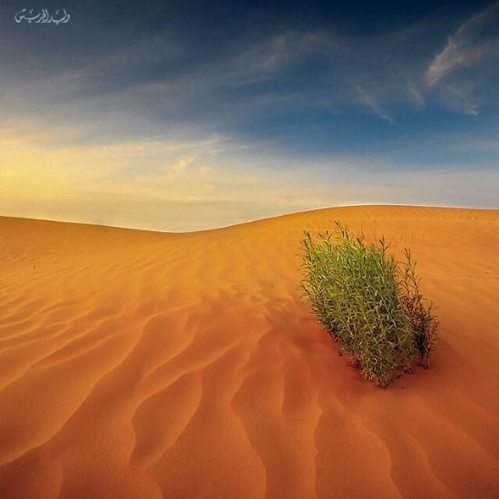 تصوير وليد الجريش3