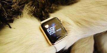 كلب يمتلك ساعة أبل