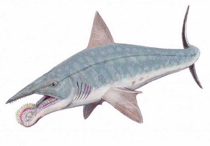 weird-sharks-you-had-no-idea-existed