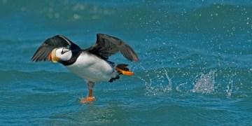 Audubon Photography
