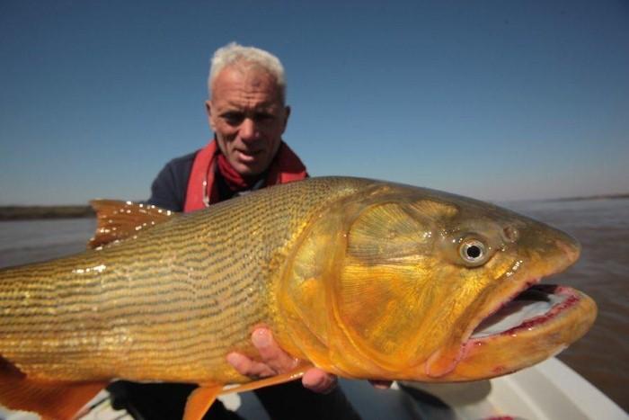 سمكة دورادو الذهبية