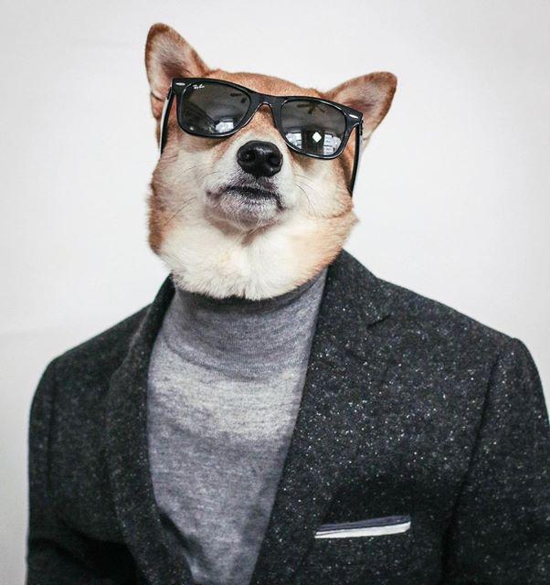 كلب أنيق