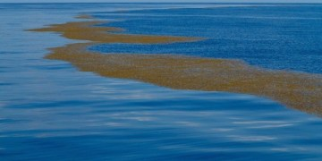 بحر ساراجاسو