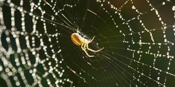 شبكة العناكب