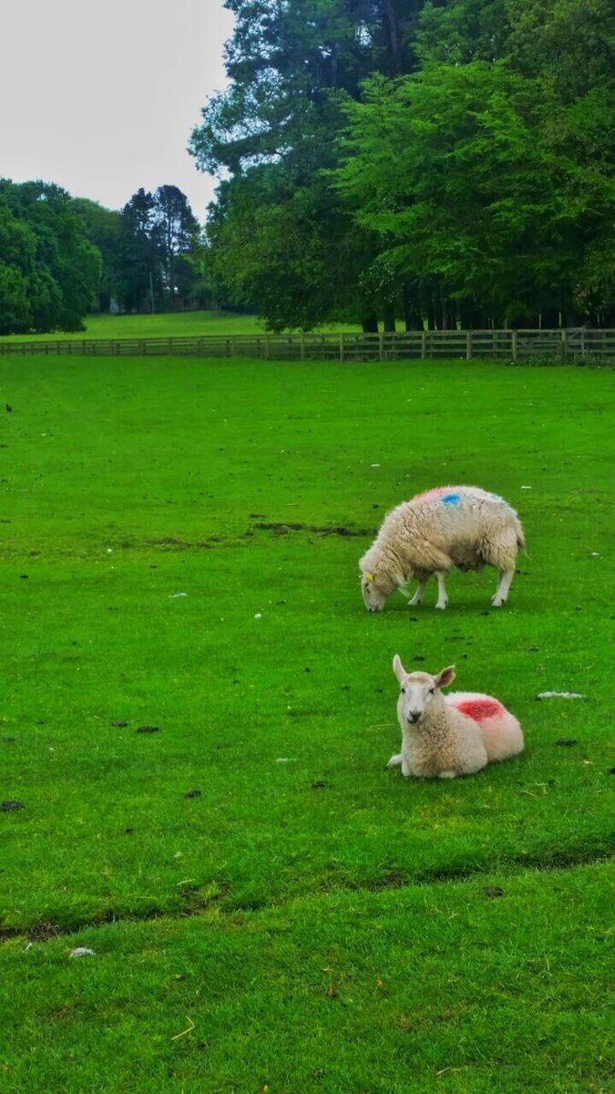 الريف الإيرلندي