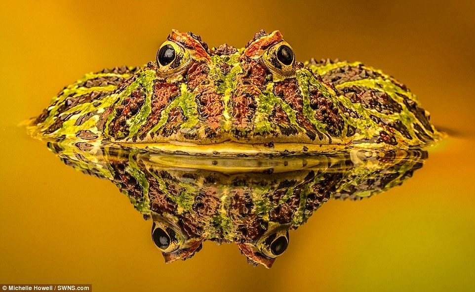 أجمل المخلوقات الطبيعية