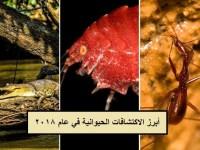 أغرب الاكتشافات الحيوانية