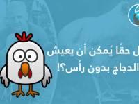 هل حقاً يمكن أن يعيش الدجاج بدون رأس؟!
