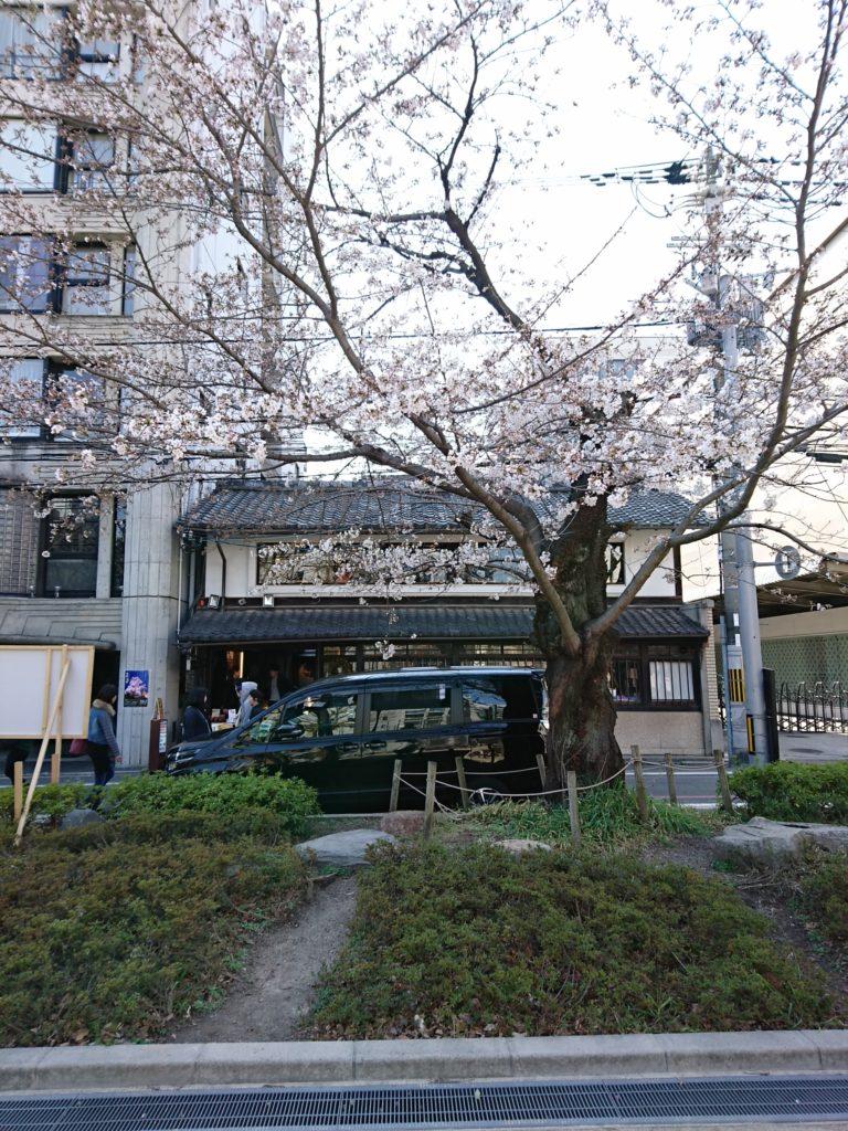 御射山公園の桜