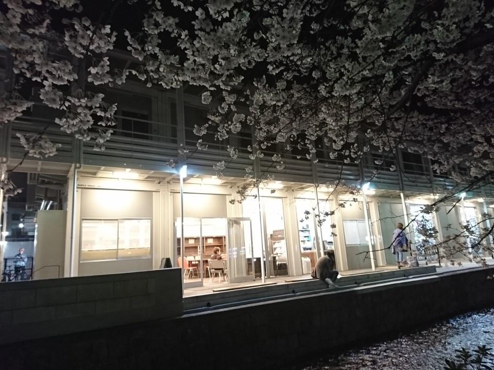京都木屋町・夜の高瀬川の桜(トラベリングコーヒー前)