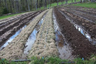 A Good Reason to Farm Using Raised Beds!