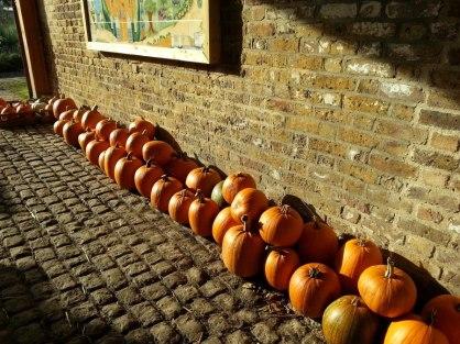 Abundance London community project Chiswick-pumpkins