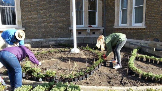 Abundance London Flag Pole Garden planting