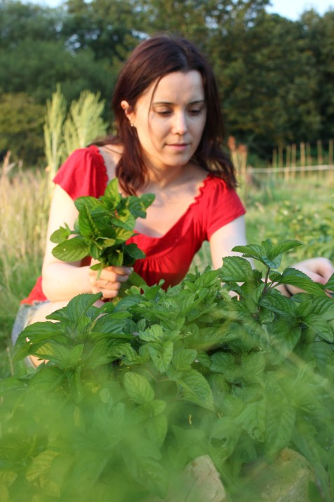 vicki picking mint for wild green pesto