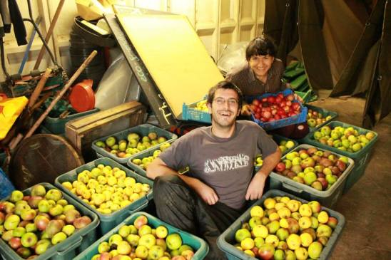 Dot and Gee in the apples for Apple Day