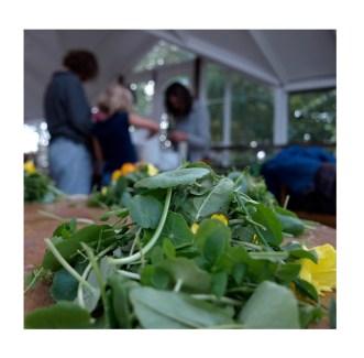 foraging workshop image