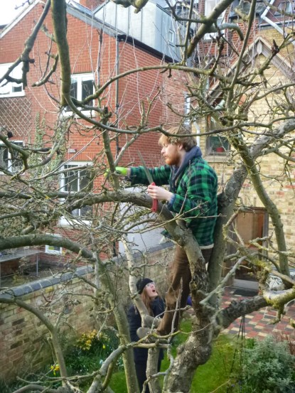 pruning image 28thfebruary2016