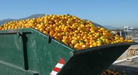 food waste image_citrus_