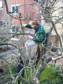fred-pruning-up-a-tree-rs-house