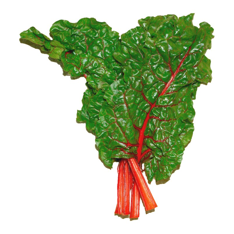 Fresh Organic Rainbow Chard Vegetable