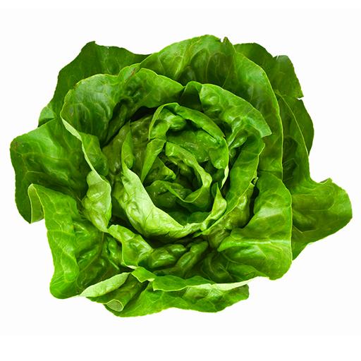 Fresh Organic Butter Lettuce Vegetable