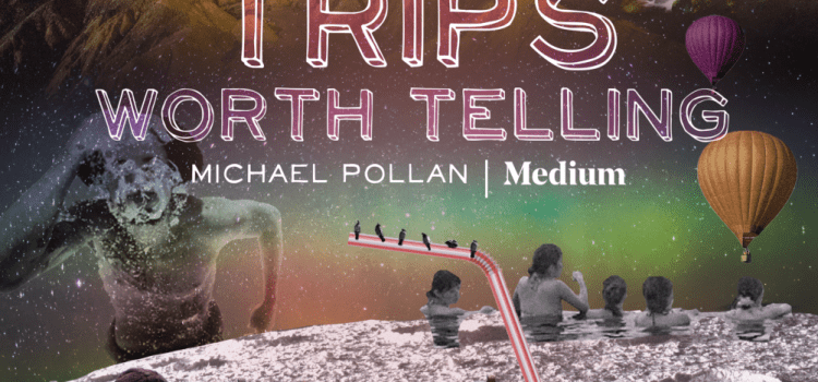 Trips Worth Telling, Medium & Michael Pollan | dori mondon-freeman | Ayahuasca and the Angel in the Mirror | Abundant Content
