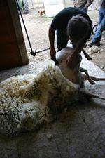 11821_will-shearing.jpg