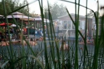 12525_summer-reeds-09.jpg