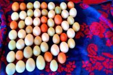 16497_5_eggs_edited_compress.jpg