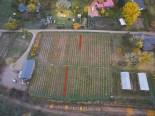 16510_New-planting-rows.jpg