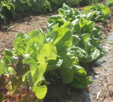 gardenGlendive