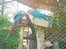 Araras e papagaios