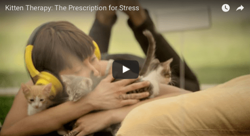 The Kitten Box – Stress Reduction