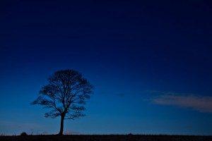 tree-silhouette-at-night-11296573307pby-300x200