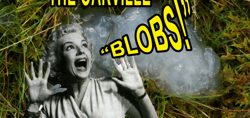 The Oakville Blobs: Those Two Weeks Where It Rained Blobs