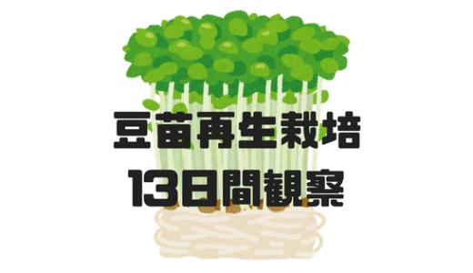 豆苗の再生栽培を13日間観察してみた!