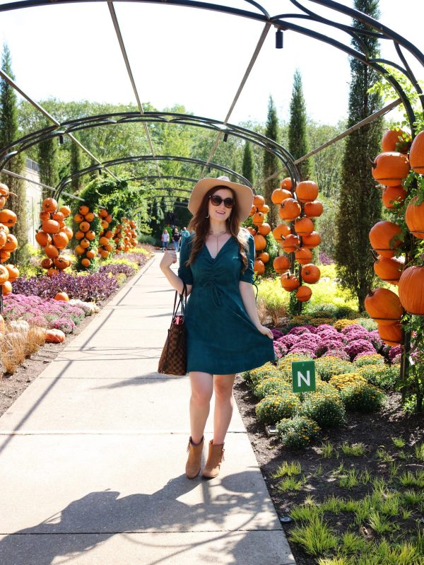 Sugarlips Fit and Flare Ruched Faux Suede Dress | Dillard's Sugarlips Fit and Flare Ruched Faux Suede Dress | cheekwood | cheekwood nashville | cheekwood botanical gardens | cheekwood botanical gardens fall | cheekwood fall | Nashville fall | what to do in Nashville | what to do in Nashville fall