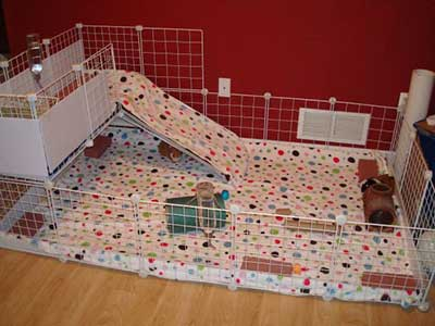 Make Your Own Guinea Pig Cage Abyssinian Guinea Pig Tips