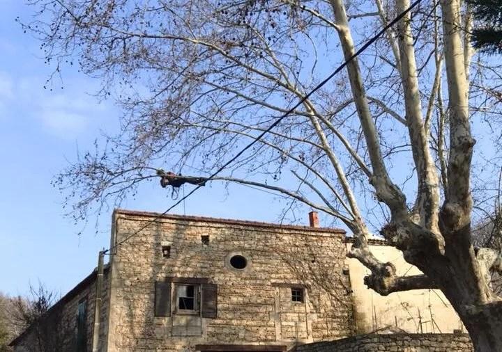 Elagage en hiver - Taille au sec des arbres feuillus