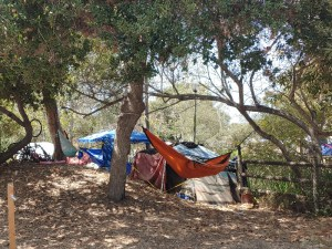 Tents have sprung up all over the People's Park in Isla Vista. It is much different now, but we are meeting in a clear section of the park.