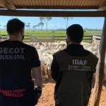 Operação Fake Bois revela que peão de fazenda era usado em sonegação fiscal