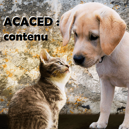 programme ACACED chien chat