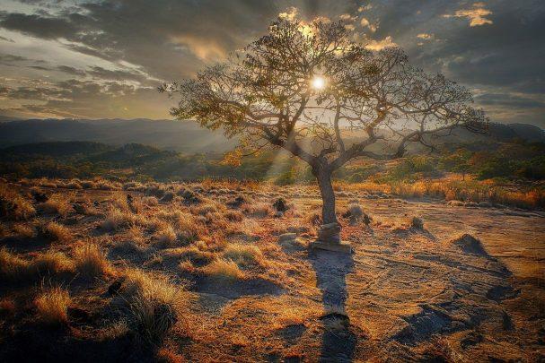 sunset, tree, grasses