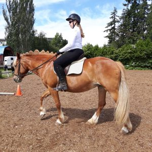 Beginner rider on chestnut horse