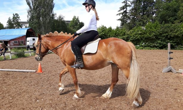 Beginner Riding & Horsemanship