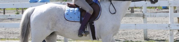 Riding & Horsemanship Level 2