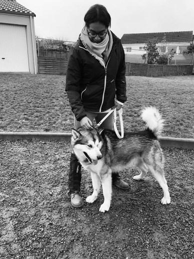 chien à l'éducation Niuk
