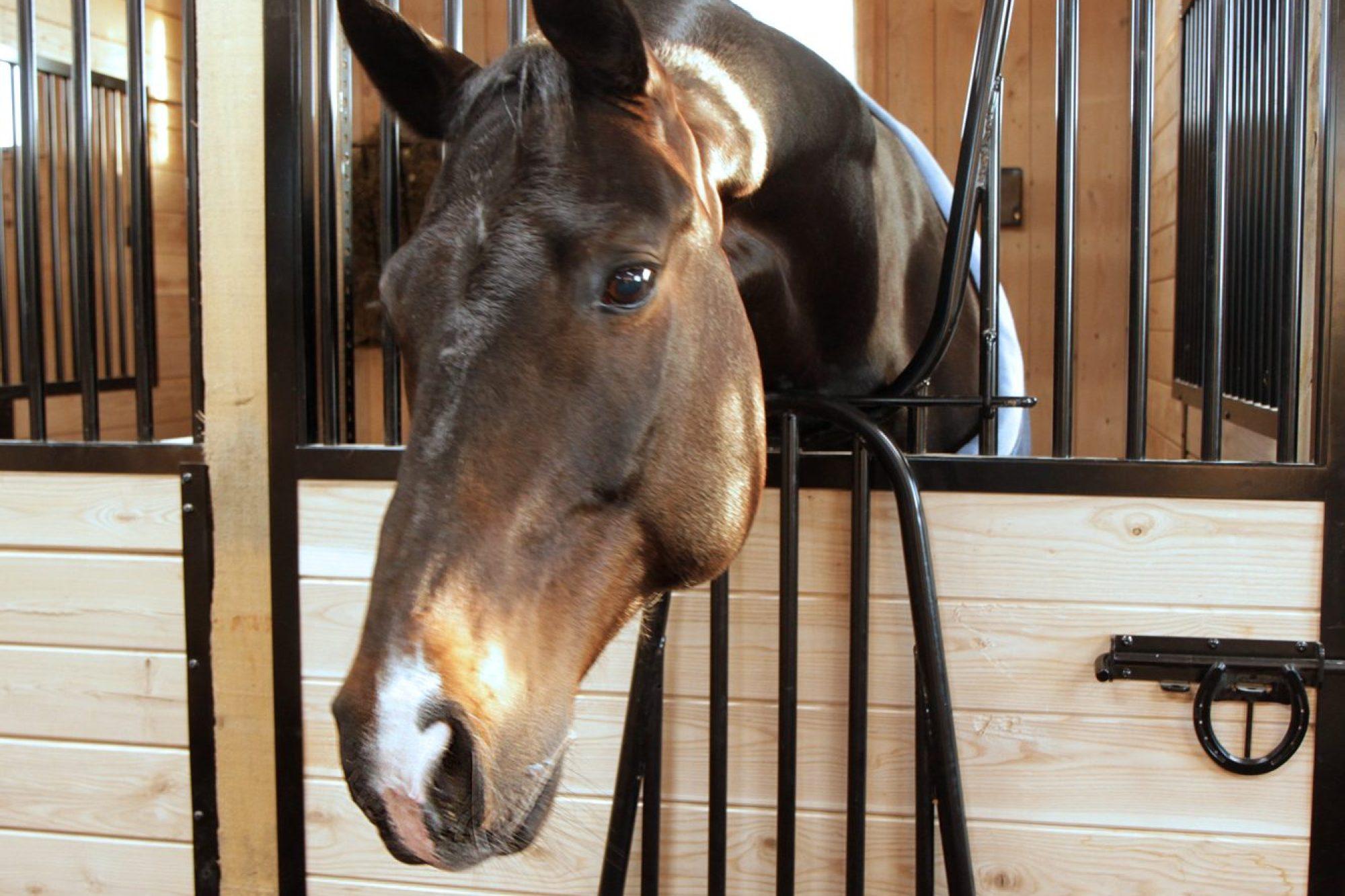 Boxes chevaux entièrement rénovées, écurie située en Montérégie.